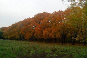 Плодушка. Осень
