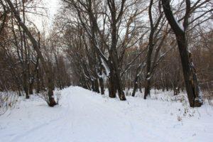 Плодушка. Зима
