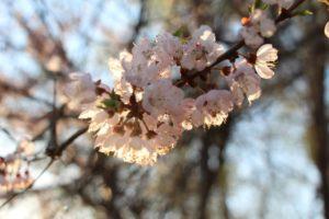 Плодушка. Весна